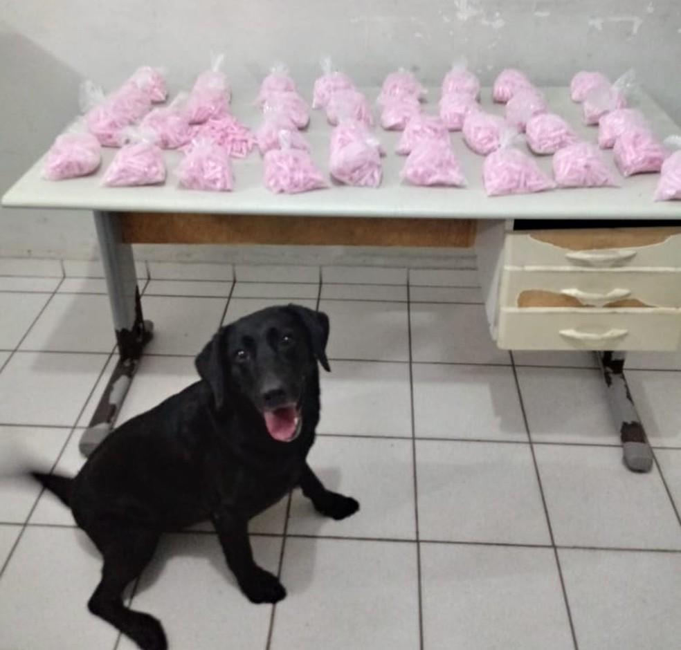 Polícia apreende mais de 3 mil pinos de cocaína avaliados em R$ 67,9 mil em Marília