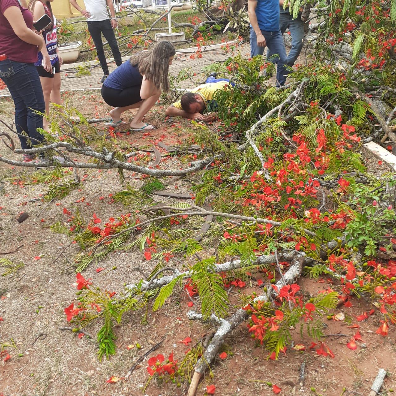 Árvore cai na cabeça de carteiro em Quatá