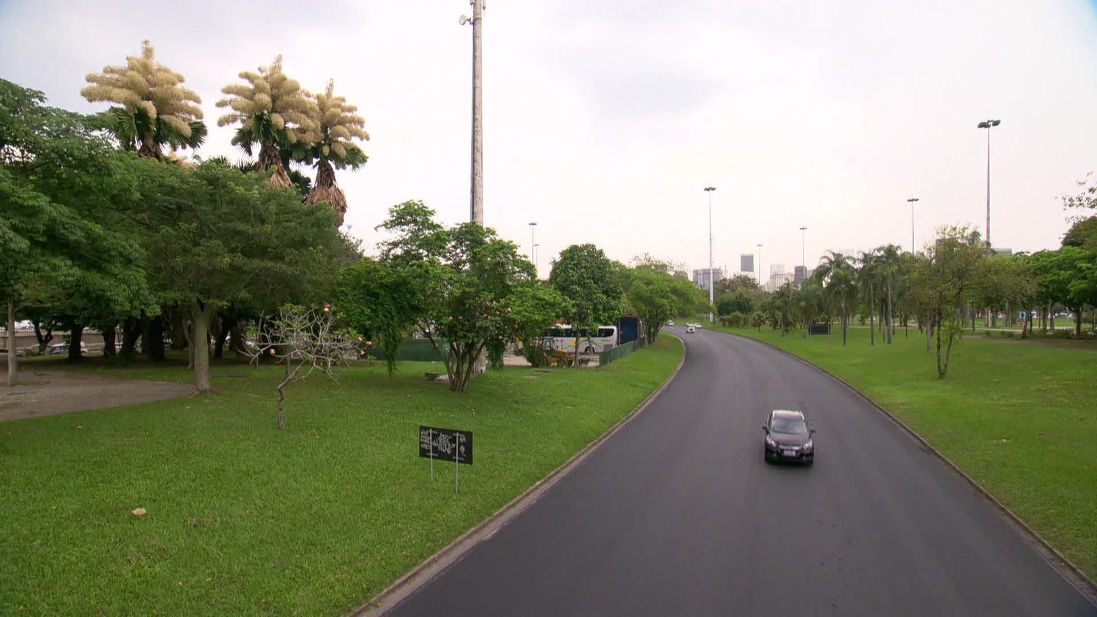 Palmeiras plantadas por Burle Marx há meio século finalmente dão flores no Rio