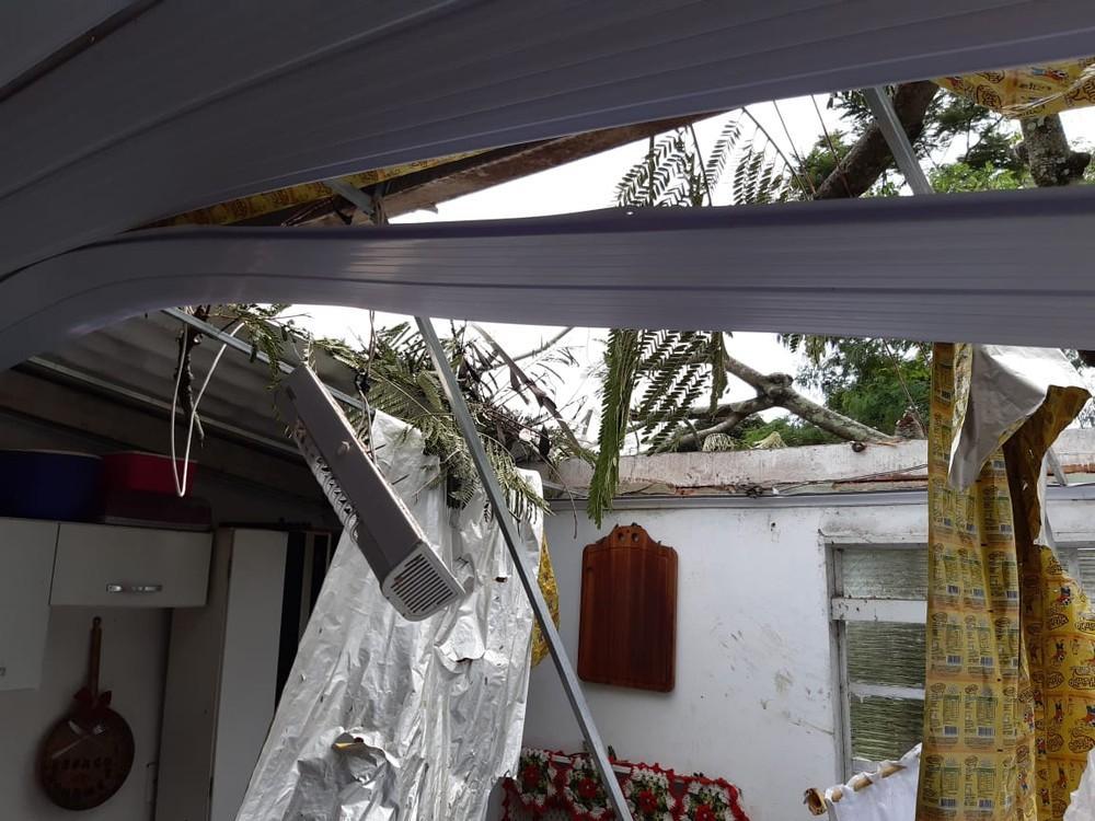 Árvore cai e atinge cozinha de residência no bairro Vila Alegrete, em Martinópolis